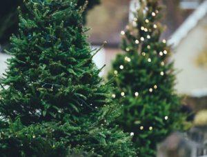Location sapin de Noël