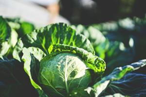 légumes printemps mars 2021